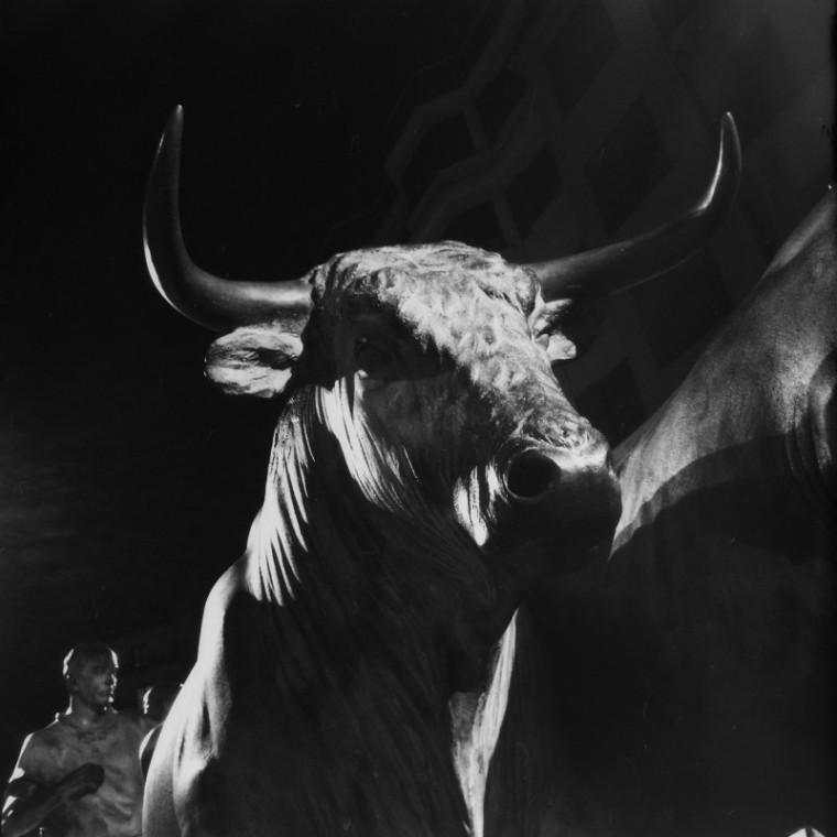 Detail, Bull
